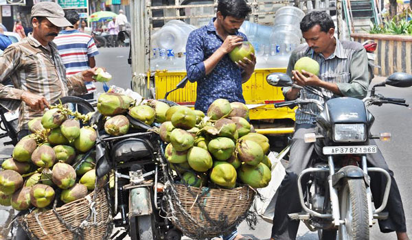 2309_coconut